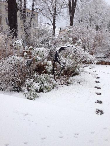 Schattentänzer im Schnee . 2014